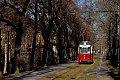 am Foto: Straßenbahn-TW 51 in einer Baumallee auf der Linie 4 Richtung Vogelwiese (Naumburg)